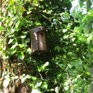 Bird box ready for new visitors
