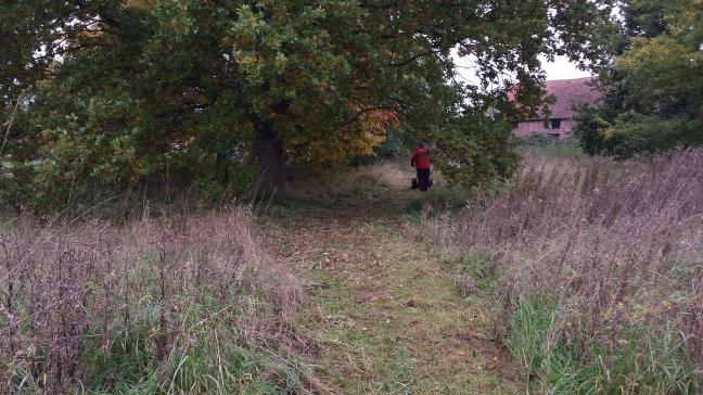 Mulbarton Common path cutting.