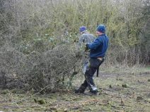 Coppicing the blackthorn on a rotational basis.