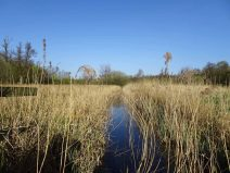 Ditch system found on a typical marshland habitat.