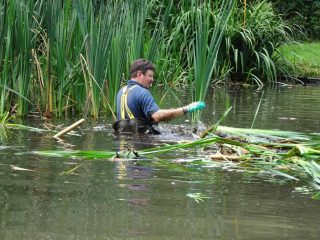 Thinning out of invasive bulrush.