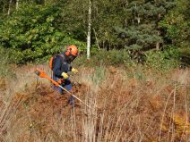 Managing the bracken onsite to allow the heather to develop.