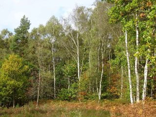 If left unmanaged the heathland areas of the site would resort back to woodland.