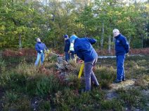 Removal of saplings onsite to stop succession to woodland.