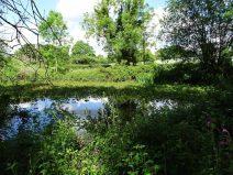 Pond found on site.