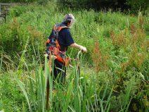 Cutting back vegetation around the pond.