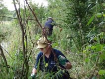 Coppicing the willow around the ditches and banks of marsh to slow down succession.
