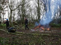 Burning the brash from coppicing.