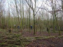 Working with Greening Wymondham volunteers to develop woodland skills.